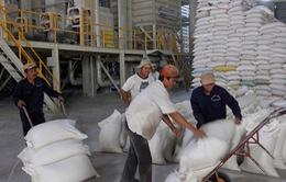 Việt Nam trúng thầu bán 800.000 tấn gạo cho Philippines