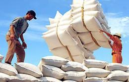 Xuất khẩu gạo sang Trung Quốc sôi động trở lại
