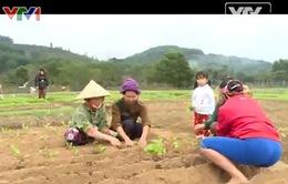 Nghị quyết 30a chính phủ góp phần làm khởi sắc huyện vùng cao Tương Dương