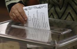 Công bố kết quả kiểm phiếu sơ bộ trưng cầu dân ý về quyền tự trị ở Donetsk