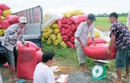1.000 tỷ đồng cho vay thu mua nông sản tại ĐBSCL
