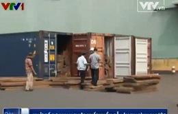 Khởi tố doanh nghiệp xuất khẩu gỗ lậu tại Bình Phước