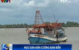 Ngư dân các địa phương kiên cường bám biển khẳng định chủ quyền
