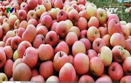 Yêu cầu Trung Quốc trả lời gần 300 tấn hoa quả nhiễm độc tuồn sang Việt Nam