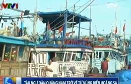 Nhiều tàu đánh bắt xa bờ của ngư dân Quảng Nam trở về từ vùng biển Hoàng Sa