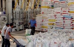 Kim ngạch xuất khẩu gạo vùng ĐBSCL đạt gần 1 tỷ USD