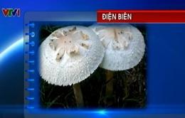 7 người suýt mất mạng vì ăn nấm ô tán trắng phiến xanh