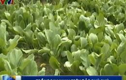 Ứng dụng khoa học để trồng rau xanh trên đảo Phú Quý