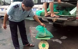 Quảng Ninh bắt giữ 231kg tê tê trái phép