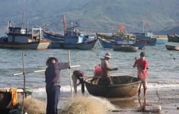 Quảng Bình: Sáu tháng đầu năm khai thác trên 24.000 tấn thủy sản