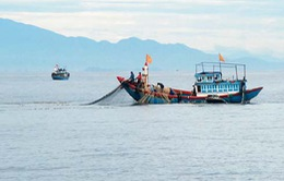 Đang đánh cá, ngư dân rơi xuống biển mất tích
