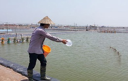 Sóc Trăng: Đầu tư hàng trăm tỷ đồng phát triển nghề nuôi trồng thủy sản