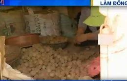 Bùng phát tình trạng khoai tây Trung Quốc đội lốt khoai tây Đà Lạt