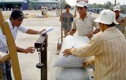 Giá gạo tăng cao nhất trong vòng 1 năm