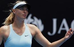 Australian Open: Sau Serena, đến lượt Masha rời giải