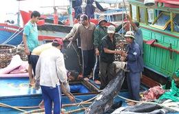 Cá ngừ đại dương – mặt hàng thủy sản tiềm năng nhất của Việt Nam
