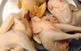 Bất thường tăng vọt gà đông lạnh lậu