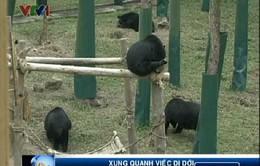 Dự án Trung tâm cứu hộ gấu Việt Nam: Quá nhiều vướng mắc