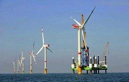 Phát triển điện gió: Vướng mức giá bán điện