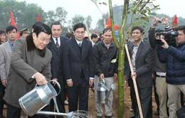 Chủ tịch nước phát động Tết trồng cây tại Bắc Giang