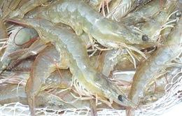 Việt Nam - Top 3 nước bị từ chối nhập khẩu thủy sản lớn nhất