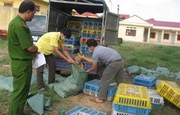 2/10 mẫu gà lậu từ Lạng Sơn dương tính với H5N1