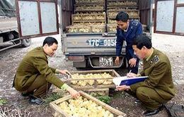 Tràn lan giống gia cầm từ Trung Quốc