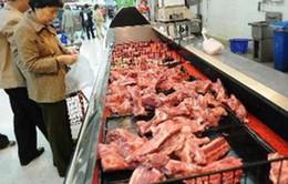 Phát hiện một số mẫu lợn có virus cúm