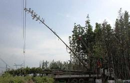 Vụ mất điện thế kỷ: Do cần cẩu trồng cây