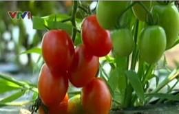 Nhật Bản đầu tư nông nghiệp vào Việt Nam: Nhiều rào cản