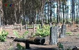 Rừng đầu nguồn Quảng Bình có phải là rừng nghèo?