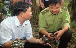 VQG Cúc Phương đón nhận 71 cá thể rùa quý hiếm