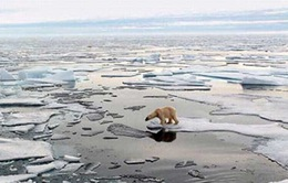 Con người - thủ phạm gây biến đổi khí hậu