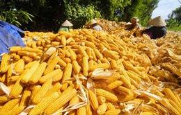 Tái cơ cấu nông nghiệp: Phải thu hút đầu tư tư nhân