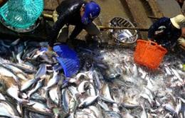 Tái cơ cấu ngành cá tra: Nông dân đứng ngoài cuộc