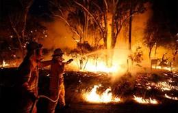 Cháy rừng hàng loạt tại bang New South Wales