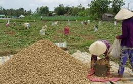 Cả tin, nông dân Trà Vinh bị chiếm đoạt gần 1 tỷ đồng