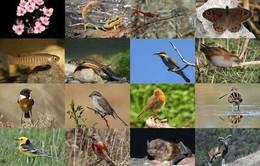 Việt Nam một trong 10 trung tâm đa dạng sinh học phong phú nhất