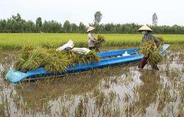 Thu nhập của nông dân Việt Nam vẫn ở mức rất thấp