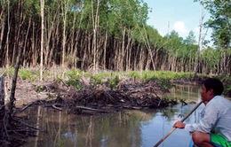 Rừng khu Ramsar Mũi Cà Mau sắp chỉ còn tên gọi?