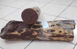 Hải quan Hải Phòng thu giữ 80 tấn gỗ quý hiếm từ Ấn Độ