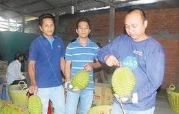 Thương lái Trung Quốc và thủ đoạn phá hoại chất lượng hoa quả bằng hóa chất