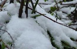 Mưa tuyết Sapa: Du khách mừng, dân bản địa lo