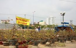 Sôi động thị trường mai Tết miền Trung