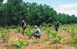 Sử dụng đất sai mục đích bị phạt đến 500 triệu đồng