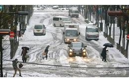 Bão tuyết kinh hoàng tại Nhật Bản