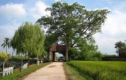 Trao giải Công trạng cho dự án bảo tồn nhà cổ Đường Lâm