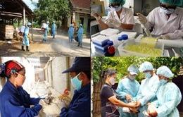 Ứng phó khẩn cấp với các chủng virus cúm gia cầm