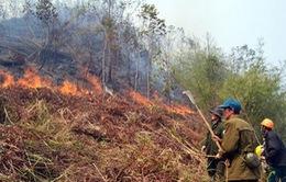 Đã khống chế thành công vụ cháy rừng tại Sa Pa