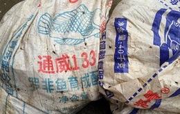 Thủy sản nhập lậu tung hoành thị trường trong nước